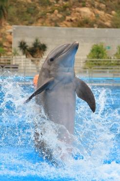 dolphin always (2).JPG